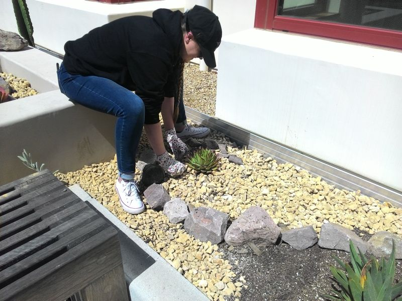 a student planting