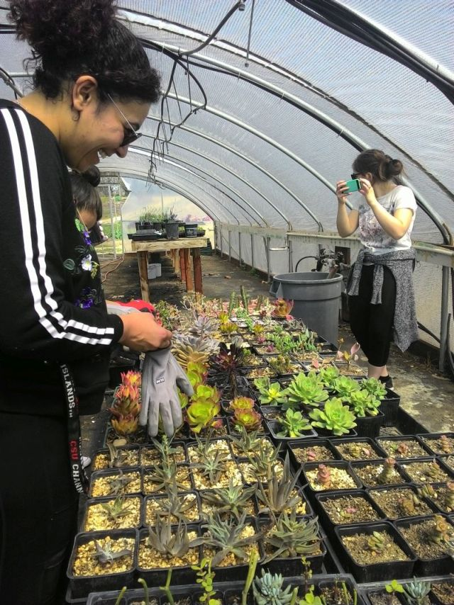 students working with succulents